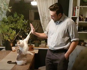 Real Estate Agent High Fives his Cat after a Deal Closes